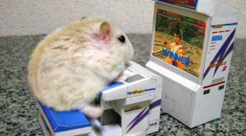 mouse bermain game